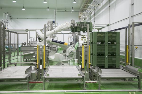 Extracción innovadora de jugo de melón o sandía, un sistema único